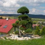 010 - Borovice lesní - Bruntál