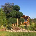 Cypřišek Lawsonův 'Lycopodioides' v okrasné zahradě