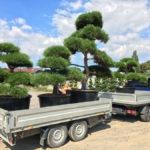 Doprava tvarovaných stromů - 01