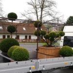 Doprava tvarovaných stromů - 02
