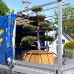 Doprava tvarovaných stromů - 04