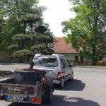Doprava tvarovaných stromů - 05