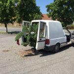Doprava tvarovaných stromů - 06