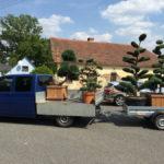 Doprava tvarovaných stromů - 09