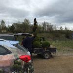 Doprava tvarovaných stromů - 12
