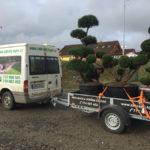 Doprava tvarovaných stromů - 16