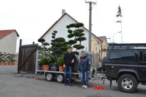 expedujeme stromy