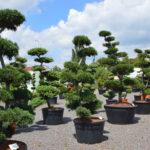 Impeka - velkoobchod stromů - 1