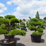 Impeka - velkoobchod stromů - 2