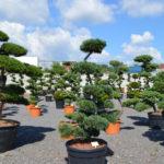 Impeka - velkoobchod stromů - 3