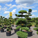 Impeka - velkoobchod stromů - 4