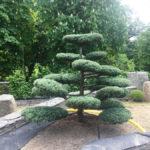 Jalovec v okrasné zahradě - 4