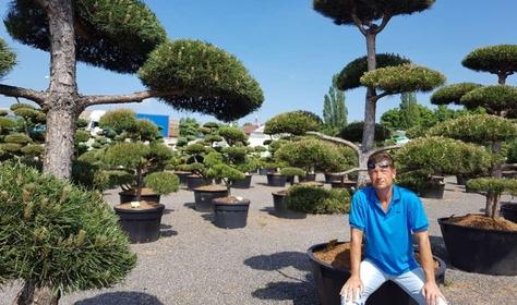Tvarované okrasné stromy na jednom místě