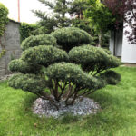 Okrasná zahrada Šestajovice - 11