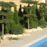 Okrasná zahrada 4