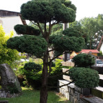 Okrasná zahrada Podlesí - 10