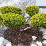 Okrasná zahrada Znojmo - 14