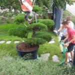 Okrasná zahrada Znojmo - 24
