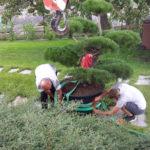 Okrasná zahrada Znojmo - 25