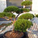 Okrasná zahrada Znojmo - 33