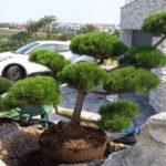 Okrasná zahrada Znojmo - 35