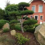 Okrasné jehličnany v zahradě - 01