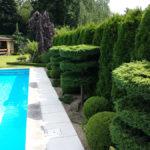 Okrasné jehličnany v zahradě - 3