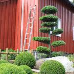 Okrasné jehličnany v zahradě - 4