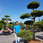 Okrasné stromy Impeka - Milín - 14