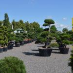 Okrasné stromy Impeka - Milín - 18