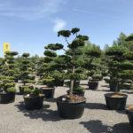 Okrasné stromy Impeka - Milín - 23