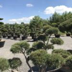 Okrasné stromy Impeka - Milín - 28