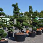 Okrasné stromy Impeka - Milín - 31