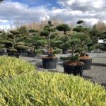 Okrasné stromy do zahrady - 01