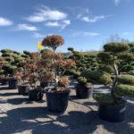 Okrasné stromy do zahrady - 08
