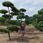 Stromy na plantážích - 02