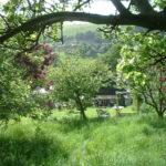 Ovocná zahrada (foto: Celestianpower)