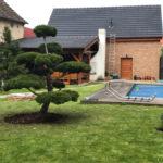 Solitérní stromy v okrasné zahradě - 08