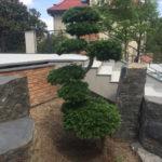 Solitérní stromy v okrasné zahradě - 10