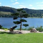 Solitérní stromy v okrasné zahradě - 15