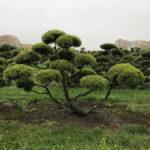 Stromy na plantážích - 47