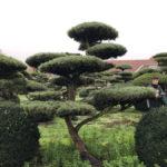 Stromy na plantážích - 48