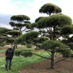 Stromy na plantážích - 50
