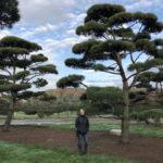 Stromy na plantážích - 51