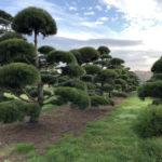 Stromy na plantážích - 52