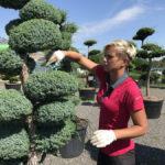 Tvarování okrasných stromů