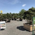 Tvarované okrasné stromy Impeka - 001