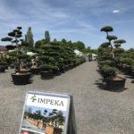 Tvarované okrasné stromy Impeka - 002