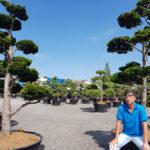 Tvarované okrasné stromy Impeka - 004