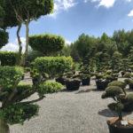 Tvarované okrasné stromy Impeka - 010